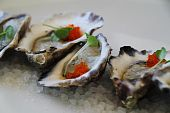 Oysters Close-up
