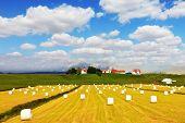 picture of haystacks  - Rural pastoral after harvesting - JPG