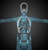 image of nod  - 3d render medical illustration of the lymphatic system  - JPG