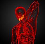 foto of jaw-bone  - 3d rendered illustration  - JPG