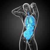 stock photo of respiratory  - 3d render medical illustration of the human digestive system and respiratory system  - JPG