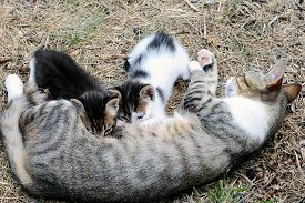 stock photo of lactating  - Mother cat and kittens during lactation photographed in daylight - JPG