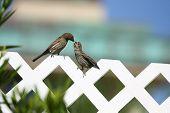 Backyard birds 2