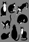 cats of black color