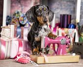 Dachshund dog in a tie and sewing machine, tailor for dogsFashion designer poster
