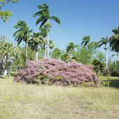 botany garden, Jardin Botanico de Cienfuegos, Cuba