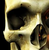 Close Up Skull Eye