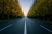 Empty Road In City With Trees In Autum poster