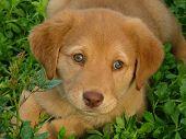 Mijn Puppy