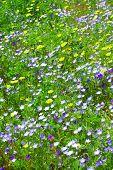 Flores silvestres de la pradera