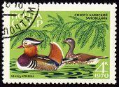 Mandarin Ducks On Post Stamp