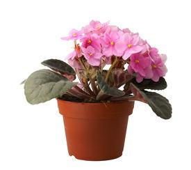 stock photo of flower pot  - beatiful flower in pot on white background - JPG