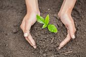 Hands Of Farmer Growing And Nurturing Tree Growing On Fertile Soil,  Environment Earth Day In The Ha poster