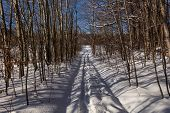 Road In Winter Forest. Sunset In Fir Forest. Winter Landscape poster