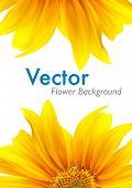Fondo de vector de flor de verano