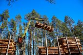 Crane In Forest Loading Logs In The Truck. Crane Operator Loading Logs On To Truck On A Nice Spring  poster