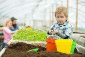 Summer Gardening. Small Boy Gardening In Summer. Summer Gardening Concept. Summer Gardening Of Famil poster