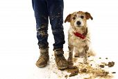 Funny Dirty Dog And Child. Jack Russell Dog And Boy Wearing Boots After Play In A Mud Puddle With As poster