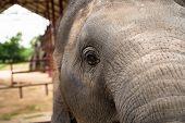 Elephant Portrait. Elephant On A Nature Background. Elephant Close Up. Elephant Face poster