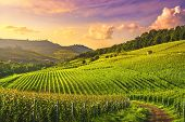 Langhe Vineyards Sunset Panorama, Barolo And La Morra, Unesco Site, Piedmont, Northern Italy Europe. poster