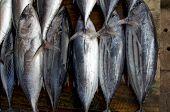 Fresh Fish Counter - Raw Tuna In A Row, Top View. Tuna On Market In Sri Lanka. poster