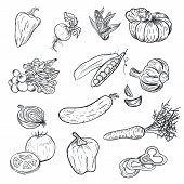 Hand Drawing Vegetables In Doodle Style Isolated On White Background. Doodle Drawing Vegetable. Ripe poster
