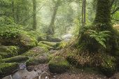 Beautiful Landscape Image Of Golitha Falls In Devon On Misty Summer Morning With Stream Flowing Thro poster