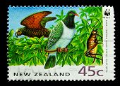 NEW ZEALAND - CIRCA 1991: A stamp printed in New Zealand, shows a giant weta,  chatham island pigeon