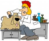 Illustration Of A Female Dog Groomer Brushing Out A Long Haired Canine. poster
