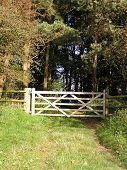 Five Bar Gate From Field To Woods