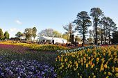 canberra floriade festival