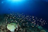 Shoal of small fish