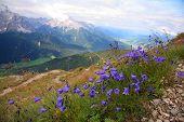 Violeta en Val Pusteria, dolomita - Italia