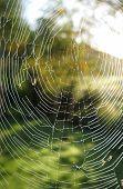Misty Spiderweb
