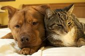 Dog And Cat Relaxing