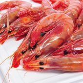 closeup of a pile of fresh raw shrimps