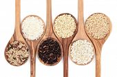 Rice varieties in olive wood spoons over white background. Wild, white, american, sweet, risotto and
