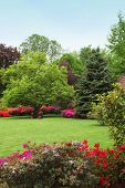 stock photo of manicured lawn  - Colourful spring garden with red and pink flowering azaleas bordering a neatly trimmed lawn - JPG
