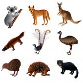 Australian Animals Vector Set