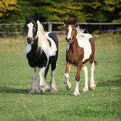 Two Horses Running On Pasturage