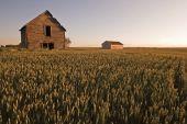 Rustic Barn at sunset