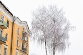 stock photo of uglich  - White trees and yellow building in winter in Uglich - JPG