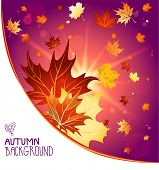 Autumn decoration with maple leaves. Copy space