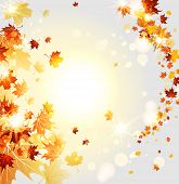 Swirl of beautiful leaves. Nature autumn backdrop with copy space