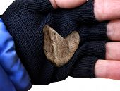Closeup of Heart Shaped rock in middle of hand
