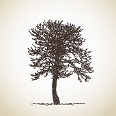 Isolated tree, Hand drawn Vector illustration