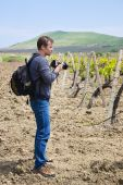 Photographer And Vineyard