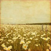 Old style  photo of daisy field and blue sky.