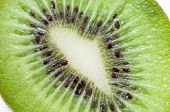Close-up Of Cut Kiwi