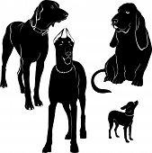 doberman basset Kurzhaar Toy Terrier